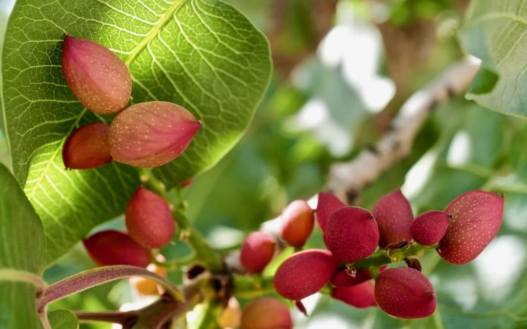 Overcome Water Stress in Crops with Potassium Fertilization